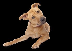 Hondenuitlaatservice, hus, trimmen, nagels knippen