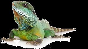 Reptielenoppas, verzorging reptiel vakantie