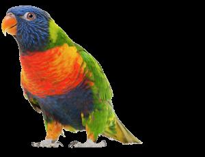 Vogeloppas, verzorging vogel parkiet papegaai vakantie